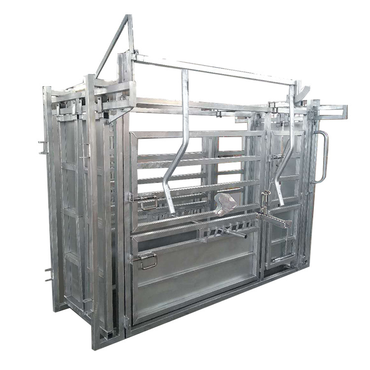 Galvanized cattle crush for weighing and checking