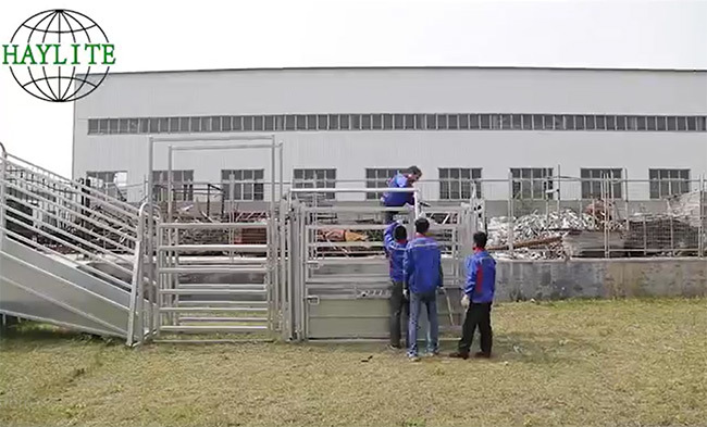 cattle handling systems for cattle working equipment