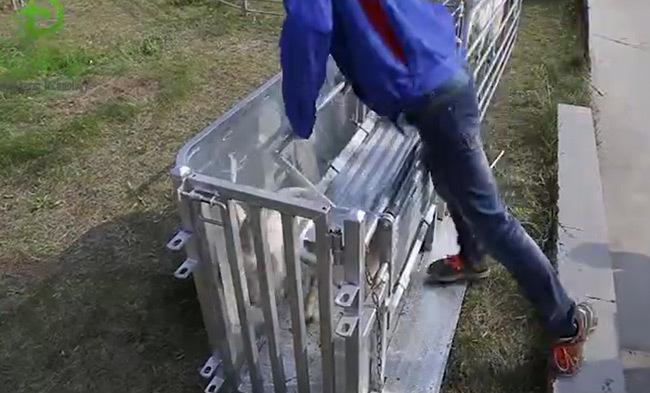 High-quality sheep catcher