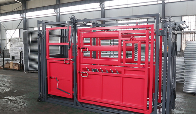 Desing best cattle chute