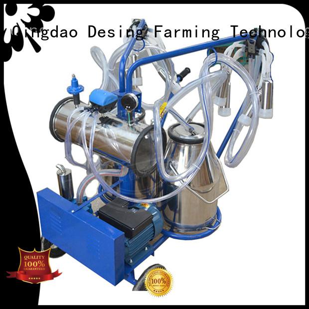 Desing cow equipment livestock handling for cow handling