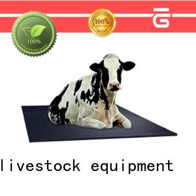 Desing cow equipment stainless for cow handling
