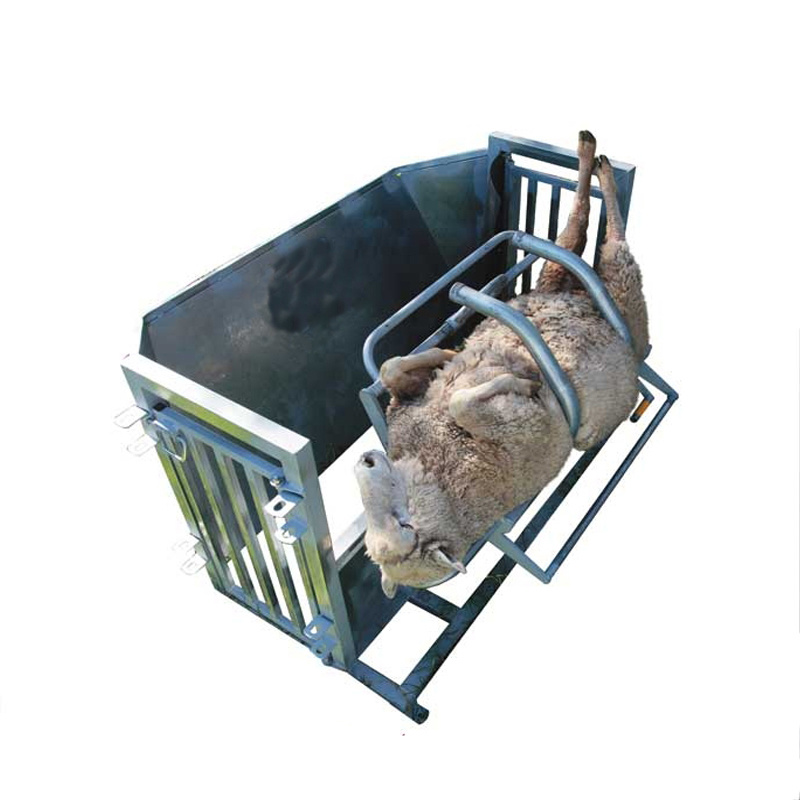 Galvanized sheep turnover catcher for sheepshearing or hoof trimming